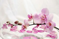 aromatherapy orchids Arkivfoton