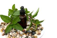 aromatherapy pepparmint Royaltyfri Foto