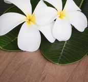 aromatherapy plumeria λουλουδιών Στοκ φωτογραφία με δικαίωμα ελεύθερης χρήσης
