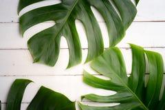 Aromatherapy produktu zdroju set, mieszkanie nieatutowy skład Tropikalny le Zdjęcie Royalty Free