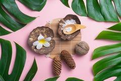 Aromatherapy produktu zdroju set, mieszkanie nieatutowy skład Tropikalny le Obraz Stock