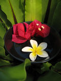 Aromatherapy Schüssel Stockbilder