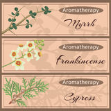Aromatherapy set collection. Myrrh, frankincense, cypress banner set. Vector illustration EPS 10 Royalty Free Stock Photos