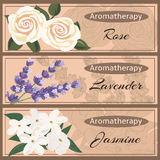 Aromatherapy set collection. Rose, lavender, jasmine banner set. Vector illustration EPS 10 Royalty Free Stock Photography