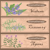 Aromatherapy set collection. Verbena, rosemary, thymus banner set. Vector illustration EPS 10 Royalty Free Stock Images