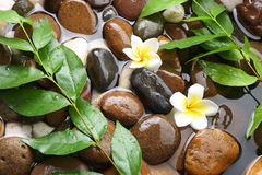 Aromatherapy spa Royalty-vrije Stock Afbeelding