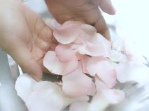 Aromatherapy z wzrastał Fotografia Stock