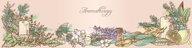 Aromatherapykruiden royalty-vrije illustratie