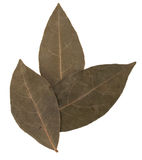 Aromatic bay leaves Royalty Free Stock Photography