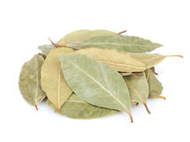 Aromatic bay leaves Stock Images