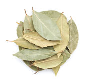 Aromatic bay leaves Stock Photography