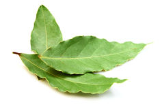 Aromatic Bay leaves ( laurel ) Stock Images