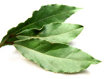Aromatic Bay leaves ( laurel ) Stock Photos
