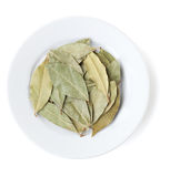 Aromatic bay leaves Stock Image