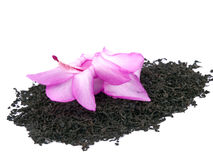 Aromatic black tea and pink flower on white Royalty Free Stock Photo