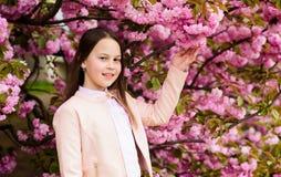 Aromatic blossom concept. Girl tourist posing near sakura. Tender bloom. Child on pink flowers of sakura tree background stock image