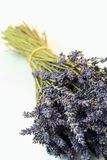 Aromatic bunch of lavender flowers Stock Image