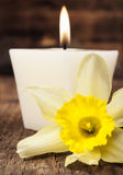 Aromatic candle and narcissus close-up Stock Images
