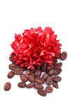 Aromatic coffee beans Royalty Free Stock Photos