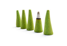 Aromatic cones. Stock Images