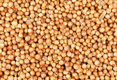 Aromatic coriander seeds as  background Royalty Free Stock Photos