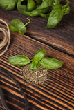 Aromatic culinary herbs, basil. Royalty Free Stock Images