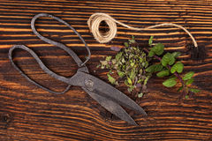 Aromatic culinary herbs, fresh and dried mint. stock photo