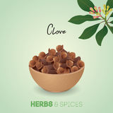 Aromatic dried clove flower buds. Clove, clover flower, buds, herbs and spices, herb, spice, tree, branches, food, ingredients, vegetable, flavors, natural Stock Image