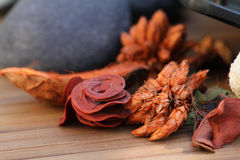 Aromatic dry flowers Stock Image