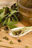 Aromatic eucalyptus Stock Photos
