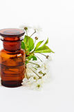 Aromatic flower oil Stock Photos