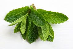 Aromatic fresh mint. Royalty Free Stock Images
