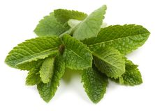 Aromatic fresh mint. Stock Photo