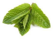 Aromatic fresh mint. Royalty Free Stock Photos