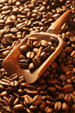 Aromatic fresh roasted coffee beans Stock Images