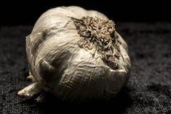 Aromatic garlic head Royalty Free Stock Image