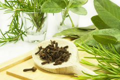 Aromatic herb. Sage, rosemary, bay leaf composition of grass cloves for cooking Stock Images