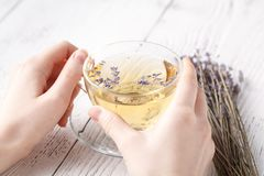 Aromatic herbal tea in glass cup holding female hands Stock Image
