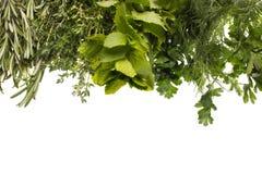 Free Aromatic Herbs Royalty Free Stock Photos - 21420538