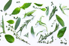 Aromatic herbs - basil, thyme, rosemary Stock Photos