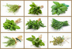 Aromatic herbs collage Royalty Free Stock Photo