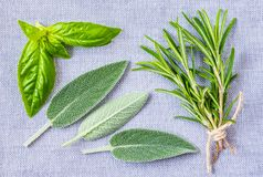 Aromatic herbs collection. Fresh aromatic herbs, sage, rosemary and basil bunches top view stock photo