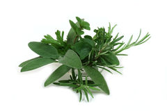 Aromatic herbs for cooking Stock Photos