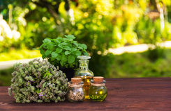 Aromatic herbs and essential oils. Natural cosmetics. Natural medicines. Peppermint and fragrant thyme. Aromatic herbs and essential oils. Natural cosmetics royalty free stock photo