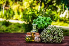 Aromatic herbs and essential oils. Thyme and mint pot. Vinegar and oil. Copy space royalty free stock images