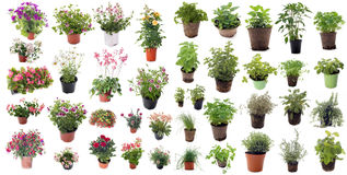 Aromatic herbs and flower plants Stock Photography