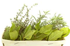 Aromatic herbs isolated Royalty Free Stock Photo