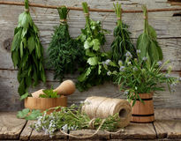Aromatic herbs lovage, dill, cilantro, hyssop, sage, blue fenugreek, thyme. On a wooden background royalty free stock photo