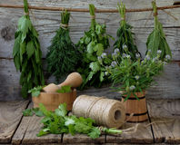 Aromatic herbs lovage, dill, cilantro, hyssop, sage, blue fenugreek, thyme. On a wooden background stock image