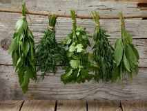 Aromatic herbs lovage, dill, cilantro, hyssop, sage. On a wooden background royalty free stock image